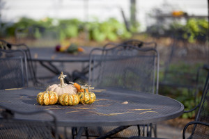 Thanksgiving Traditions - Outside - Waldorf MD - Tri County Hearth and Patio Center